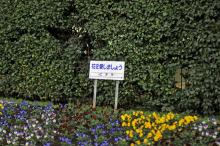 あきおのブログ-外苑5